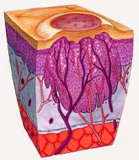 picture of a genital wart